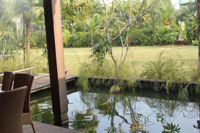 K'bon Kelapa backyard
