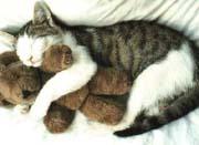 Cat Hug
