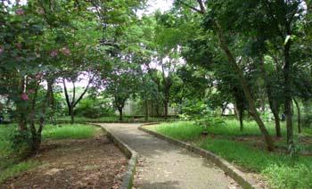 Hutan kota adalah suatu daerah di kota yang banyak ditanami pepohonan