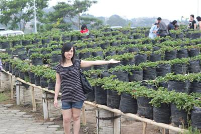 Kebun Strawberry @ Kampung Gajah